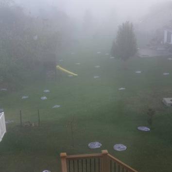 Lanterns in a backyard